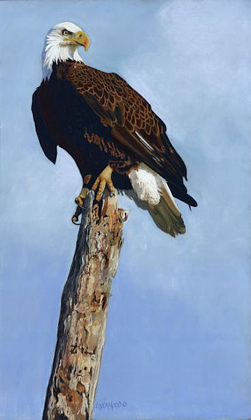 On Top of His World - BaldEagle by Patsy Lindamood
