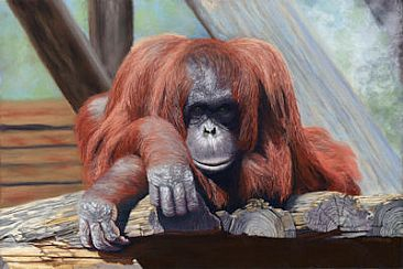People Watching - Orangutan by Patsy Lindamood