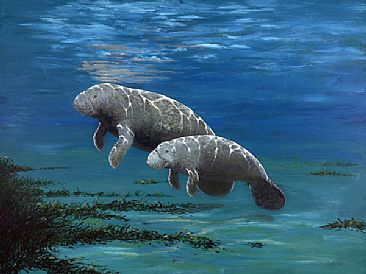 In the Shallows, A Kind Face - Manatee  by Barry Ingham
