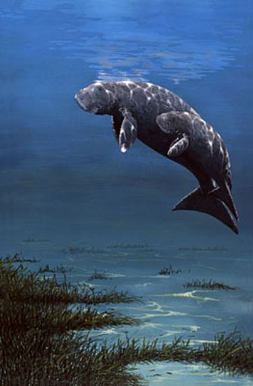 Manatee Paintings For Sale