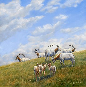 Playtime - Scimitar horned oryx - Northern Africa - endangered by Mary Louise Holt