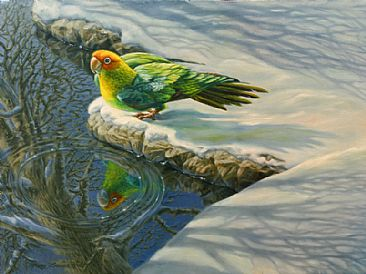 Reflecting On A Lost Treasure - Carolina papakeet in the snow by Mary Louise Holt