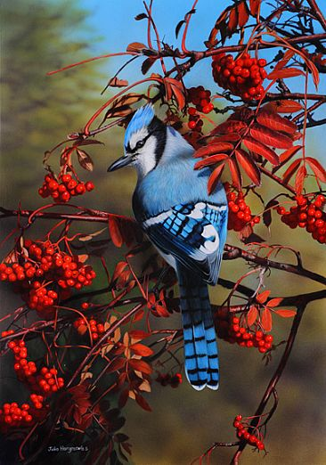 Winter Blues - Blue Jay by Julia Hargreaves