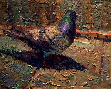 """Everyday Iridescence"" - Pigeon by David Gallup"