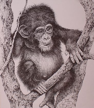 Baby Chimp - Baby chimp resting in a tree by Sarah Baselici