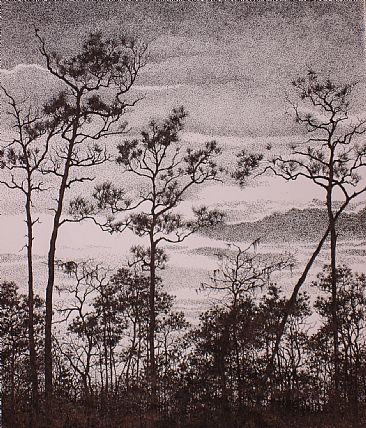 Southern Pines - Tall, thin southern pines standing against the sunset by Sarah Baselici