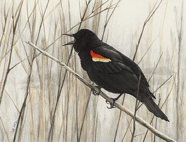 First Sign of Spring - Red-winged Blackbird (SOLD) by Sue Adair