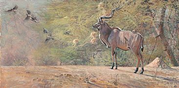 Entourage - Greater Kudu and Red Billed Oxpeckers by Kim Diment