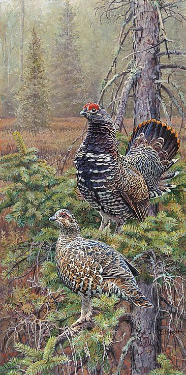 Spruce Grouse of North Country Trail - Male and Female Spruce Grouse by Kim Diment