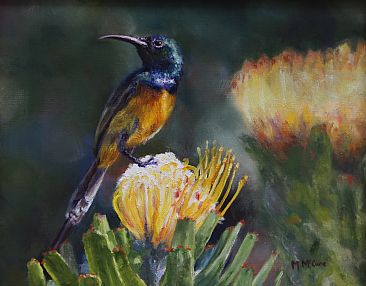 National Treasures - Sunbird on Protea flower by Michelle McCune