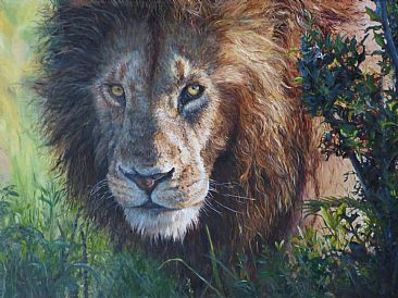 Better Hide! - African Lion by Michelle McCune