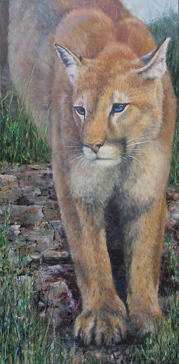 Interlude - Mountain Lion  by Michelle McCune