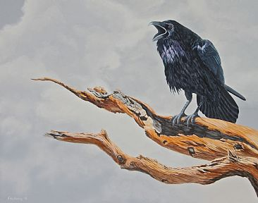 Bristlecone Raven - Raven on a Bristlecone Pine branch by Chris Frolking