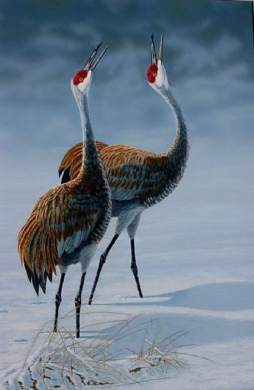 Sandhill Cranes - pair of sandhill cranes courting in the snow by Chris Frolking