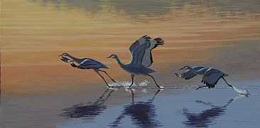 Sandhill Takeoff - Sandhill Cranes by Chris Frolking