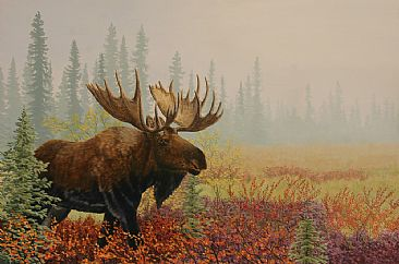 Taiga Moose - Bull moose in the Brooks Range by Chris Frolking