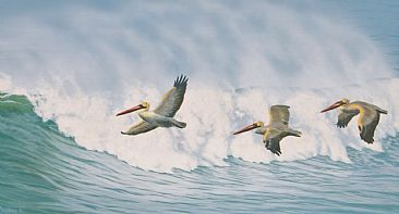 Pelican Migration - brown pelicans by Chris Frolking