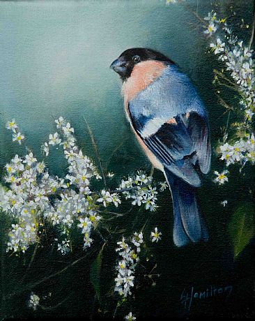 The Bandit - Bull finch by Lorna Hamilton