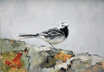 Pied Wagtail - Pied Wagtail by Lorna Hamilton