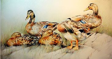 Afternoon Rest - Mallard Ducks by Lorna Hamilton