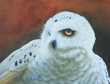 Snowy Owl, Study. (Sold) - Snowy Owl. by David Prescott