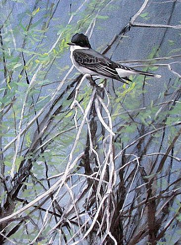 Eastern Kingbird in Willow -  by Larry McQueen