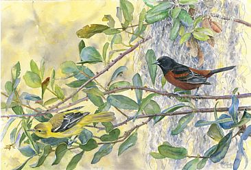 Orchard Orioles in Live Oak - Orchard Orioles by Larry McQueen