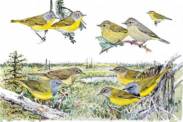 Panel 132 - E.warblers 7 - Birds of North America by Larry McQueen