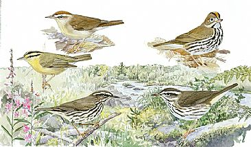 Panel 135 - E.warblers 10 - Birds of North America by Larry McQueen