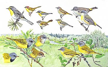 Panel 137 - W.warblers 2 - Birds of North America by Larry McQueen