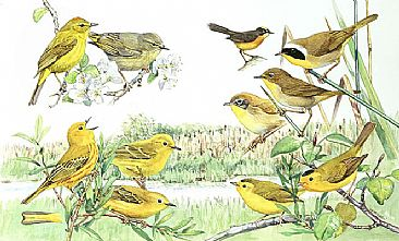 Panel 138 - W.warblers 3 - Birds of North America by Larry McQueen