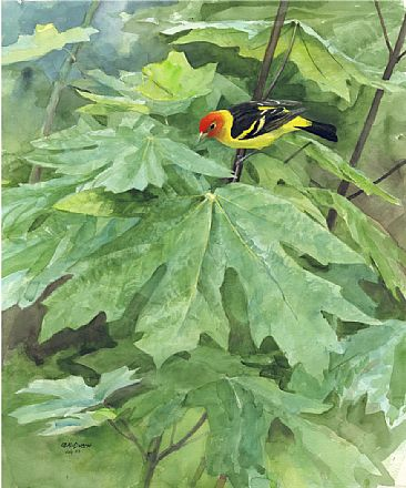 Tanager on Big Leaf - Western Tanager  by Larry McQueen