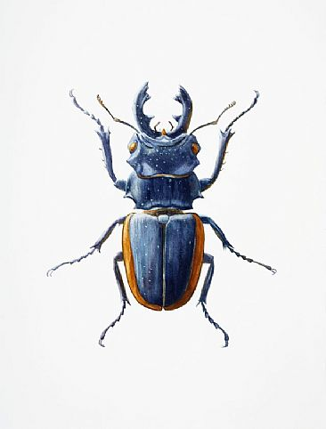 Small Stag Beetle - in...
