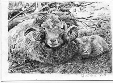 Sheep study (Sold) - domestic by LaVerne Hill