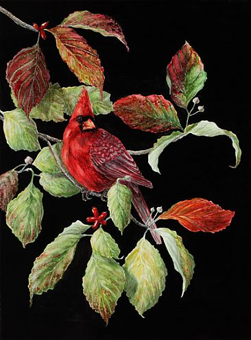 Cardinal in the Dogwoods - Bird- Cardinal, fall dogwoods by Eva Stanley