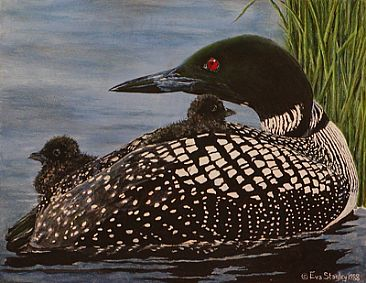 - Loon - Common Loon and chicks by Eva Stanley