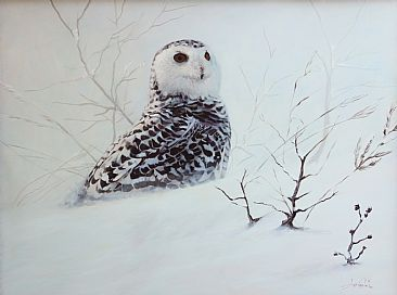 Northern Exposure - Snowy Owl by Anni Crouter