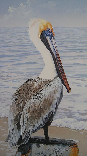 Good Old Boy - Pelican by Tykie Ganz