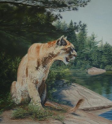 Northern Lookout - Cougar by Cheryl Battistelli