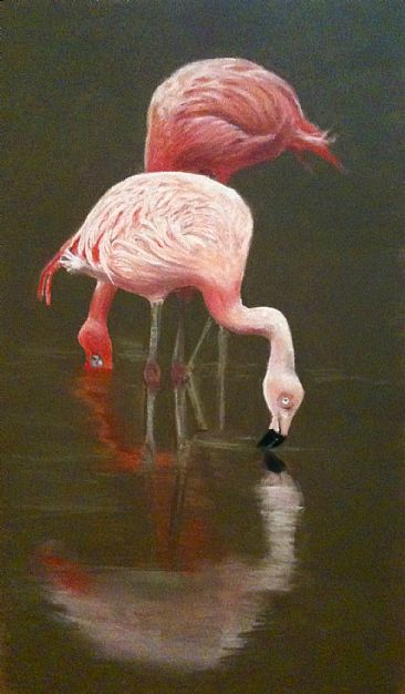 Flamingos - Flamingos by Margaret Ingles