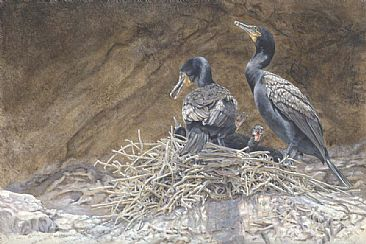 Canyon Light: Double-crested Cormorants at the Nest - Double-crested Cormorants at nest by Sharon K. Schafer
