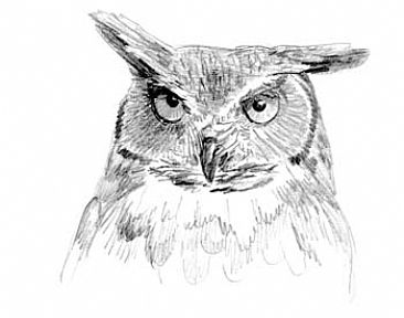 Great Horned Owl Study 1 -  by Sharon K. Schafer