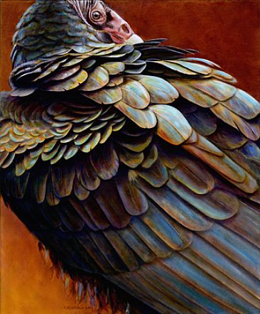 Here's Looking at You - Turkey Vulture by Kim Middleton