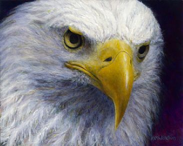 My Sunny Girl - Bald Eagle by Kim Middleton