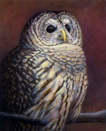 Remembering Hoot - Barred Owl by Kim Middleton