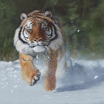 Kicking Snow - Tiger by Terry Isaac