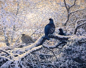 Black Grouse Roost - Black Grouse by Martin Ridley
