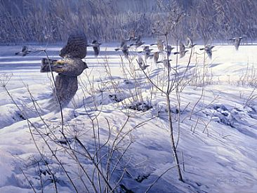 Sharpened by the Cold - Sparrowhawk chasing Fieldfares by Martin Ridley
