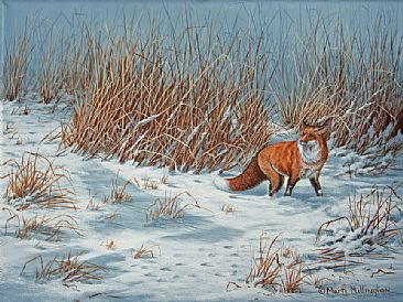 Hunting the Tallgrass - Red Fox by Marti Millington