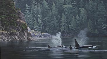 Telegraph Cove - Killer Whales - killer whales by Clinton Jammer
